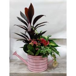 Regadera de zinc con plantas