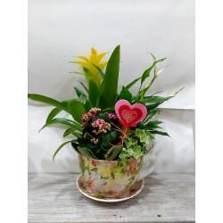 Composición de plantas en taza con plato cerámico decorado